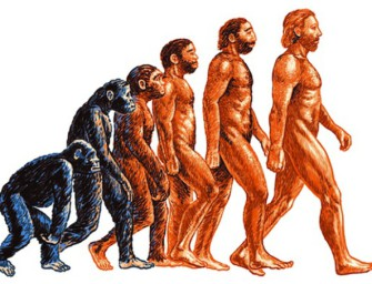 Курс «Антропология»