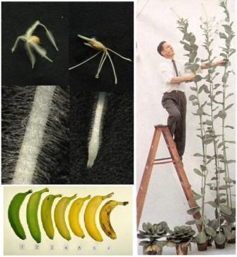 Гормоны растений, или есть ли у растений физиология?