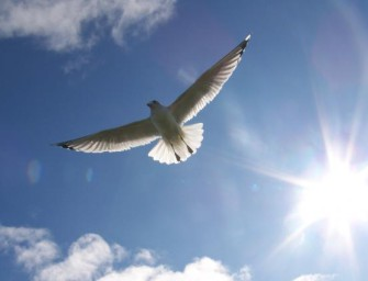 Свобода: дар или проклятье?