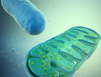 Энергетика живой клетки