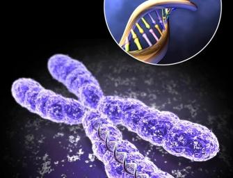 Гены, ДНК и хромосомы