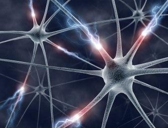 Нервная клетка и электрические сигналы