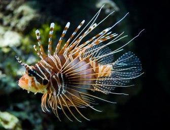 Костистые рыбы — великие приспособленцы