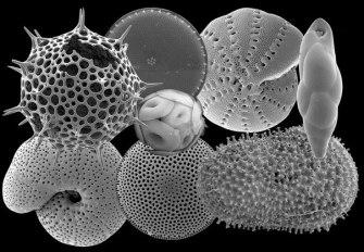 Что такое микропалеонтология и зачем она нужна