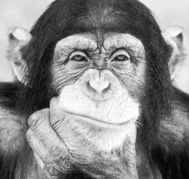 Мышление животных: продолжение