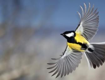 Строение птиц: все для полета, все для победы