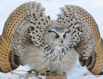 Систематика птиц: неворобьиные