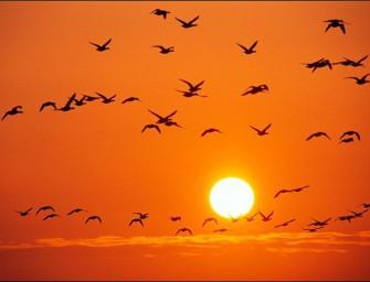 Ориентация и навигация птиц