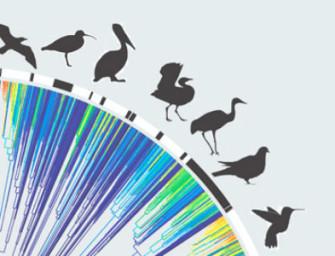 Современные представления об эволюции птиц