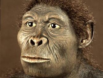 Экологические аспекты эволюции человека