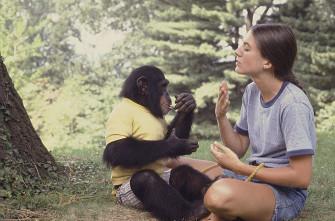 Эволюционные предпосылки речи человека-2