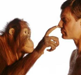 Приматы: в прошлом и настоящем