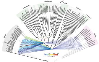 Горизонтальный перенос генов