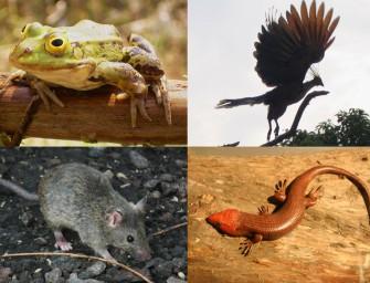 Зоологические объяснения
