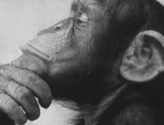Структура актов мышления у животных и человека