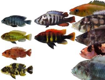 Генетические механизмы формирования эволюционных новшеств