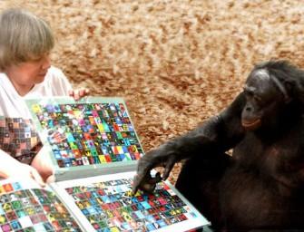 Обобщение и абстрагирование у животных