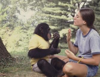 Эволюционные предпосылки речи человека. Человекообразные обезьяны