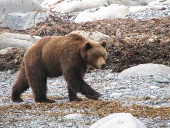 Медведи vs люди