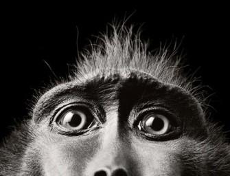 Есть ли сознание у животных?