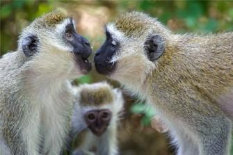 Системы коммуникации в животном мире: пути развития