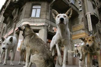 Социальное и половое поведение собак
