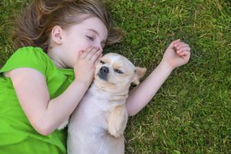 Как собаки общаются друг с другом (способы коммуникаций).