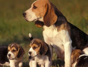 Онтогенез поведения собак