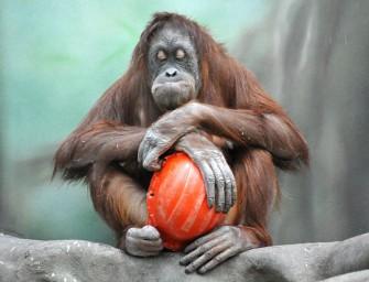 Иерархия и прогресс: от обезьяны к человеку