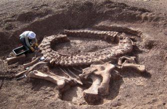 Курс «Палеонтология»