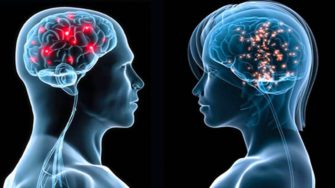 Лекция+лабораторное занятие «Интересное о мозге»