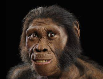 От австралопитеков к ранним Homo