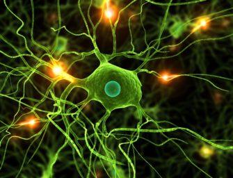Нейроны: особенности химической и клеточной организации. Потенциал покой – постоянный заряд нейрона.