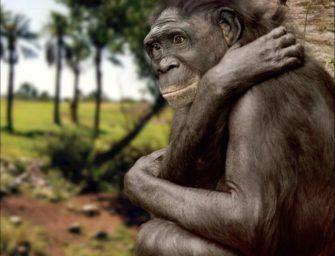 Ранние гоминиды. Эволюция любви