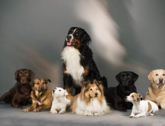Зоопсихология для владельцев собак