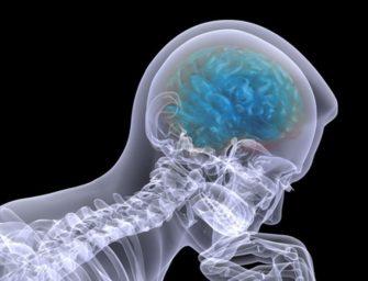 Мозг: обучение и принятие решений