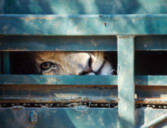 Благополучие животных в неволе
