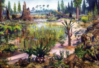 Растения преобразуют сушу (500-100 млн лет назад)