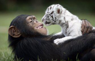 Курс «Развитие поведения животных»