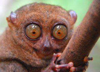 Последнее убежище лемуров, величие и закат долгопятов, рассвет планеты обезьян