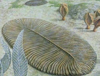 Кембрийский взрыв и его последствия (550-500 млн лет назад)