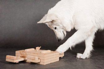 Рассудочная деятельность собаки