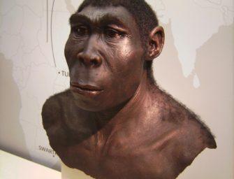 Homo erectus: непрямые пути человека прямоходящего