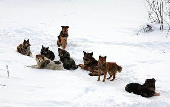 Социальное поведение собак