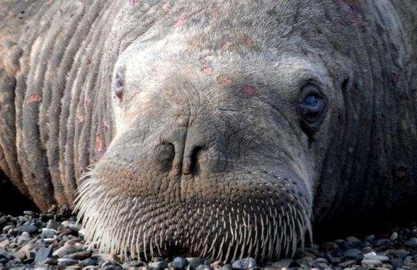 Болезни морских млекопитающих