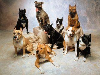 Семинар «Генетика окраса собак»