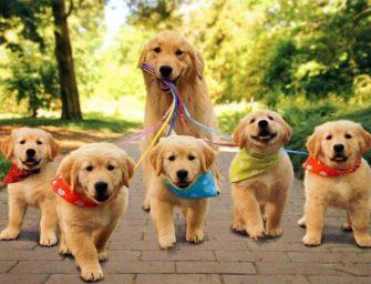 Генетика поведения собаки