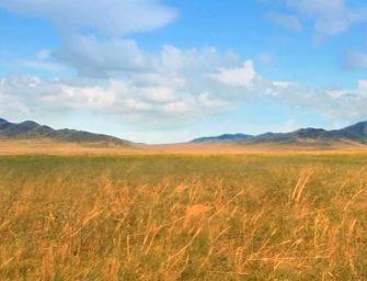Великая степь (30-0.01 млн лет назад)