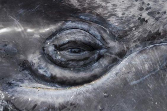 Органы чувств морских млекопитающих