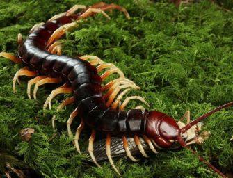 Лекция «Членистоногие: многоножки и насекомые»